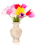 Tulips in vase isolated Royalty Free Stock Photography