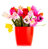 Tulips in vase isolated Stock Photography