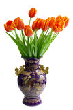 Tulips in the vase. Isolated on the white background Stock Images
