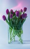 Tulips in a vase Royalty Free Stock Photos