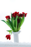Tulips. A vase with red tulips in snow Stock Image