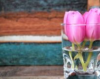 Tulips in a vase, mother's day. Small pink tulips in a transparant vase, with a painted wooden old background Royalty Free Stock Photo