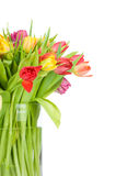 Tulips in the vase Stock Photography