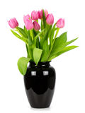 Tulips in a vase on a white background Royalty Free Stock Photography