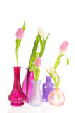 Tulips in vases Royalty Free Stock Photography