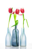 Tulips in vases Royalty Free Stock Photos