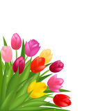 Tulips. Vector Royalty Free Stock Photo