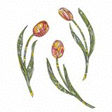 Tulips vector illustration. Hand drawn flowers background. Royalty Free Stock Photo