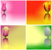 Tulips vermelhos, amarelos, brancos e cor-de-rosa Imagens de Stock