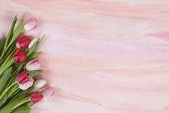 Tulips vermelhos e cor-de-rosa na aguarela pastel - mola fotografia de stock