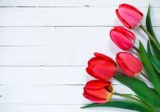 tulips vermelhos em um fundo branco Foto de Stock