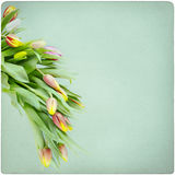 Tulips vintage background Stock Photo