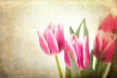 Tulips vintage Royalty Free Stock Images