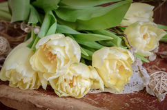 The tulips on vintage suitcase Royalty Free Stock Photo