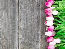 Tulips on vintage wooden planks for Easter Background Stock Image
