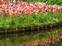 Tulips at Vondelpark in Amsterdam stock images