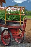Tulips wagon Stock Image