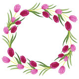 Tulips watercolor wreath on white background. Stock Photography