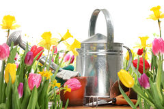 Tulips and watering can Royalty Free Stock Photos