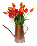 Tulips in a watering can Royalty Free Stock Photography