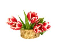 Tulips in a wattled basket isolated on white Royalty Free Stock Photos