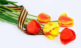 Tulips which have been tied up George by a tape Royalty Free Stock Image