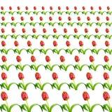 Tulips on white Royalty Free Stock Image