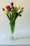 Tulips on a white background, celebration Royalty Free Stock Photography