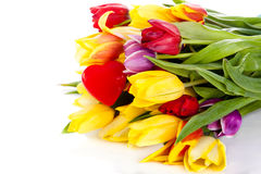 Tulips  on white background. colors of spring Stock Photo
