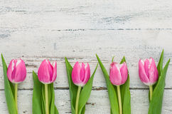 Tulips on a white background with copy space Stock Photography