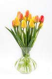 Tulips on a white background Stock Photography