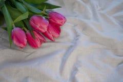 Tulips on white fabric royalty free stock photos