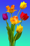Tulips on white. View of Multi coloured Tulips on a blue and green background Stock Photo