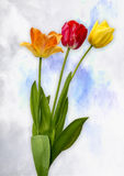 Tulips on white. View of three tulips on cloudy background Royalty Free Stock Photos