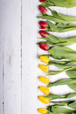 Tulips on white wooden planks eves Stock Photo