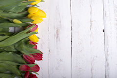 Tulips on white wooden planks eves Stock Photography