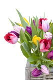 Tulips and wicker basket Royalty Free Stock Photos
