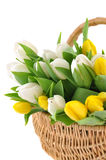 Tulips in a Wicker Basket Royalty Free Stock Images