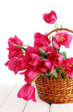 Tulips in a wicker basket Royalty Free Stock Photography