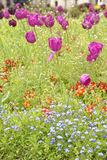 Tulips and wildflowers, Trinity Square Gardens, London, England. Purple tulips and wildflowers in tall grasses of Trinity Square Gardens, London, England on Stock Images