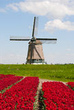 Tulips and windmill Stock Image