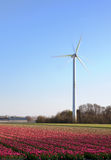 Tulips and windmill in Holland. Modern windmill and springtime tulip fields in Holland Stock Photography