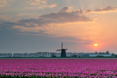 Tulips and windmill Stock Photography