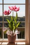 Tulips on window Stock Photography
