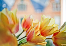 Tulips in the Window Stock Image