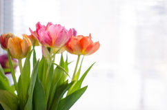Tulips at the window Royalty Free Stock Photography