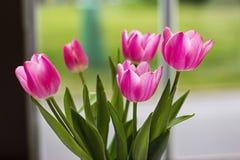 Tulips in window. Light pink tulips bouquet in window royalty free stock photo