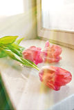 Tulips on a window sill Stock Images