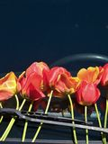 Tulips on windshield Royalty Free Stock Images