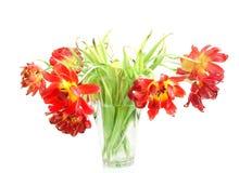 Tulips Withered em um vaso fotos de stock